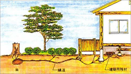 シロアリの侵入経路 地中の巣と餌場は「蟻道」(道しるべフェロモンにより往来)で連絡されてい...